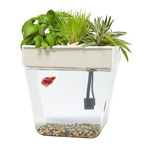 Best betta fish aerator review 2019