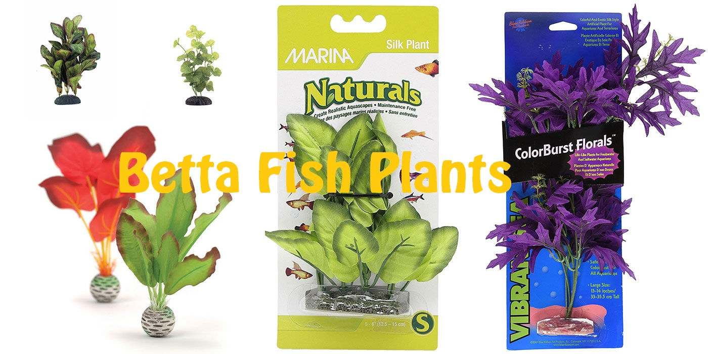 Best Betta Decor Review 2019