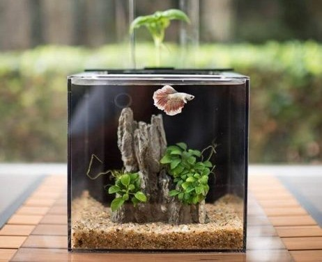 betta fish aquarium filter