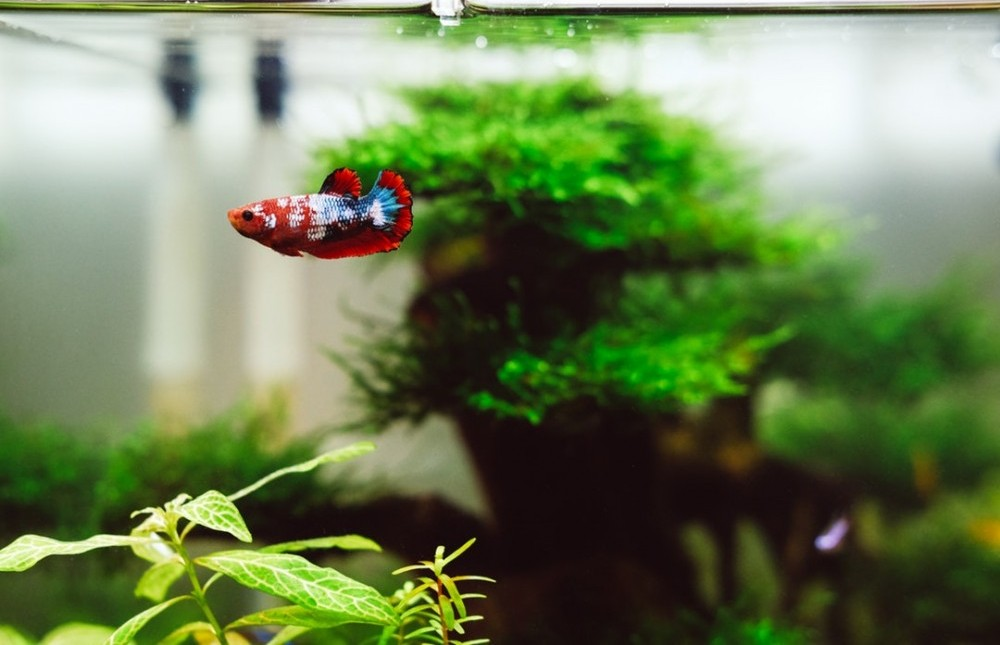 Best betta fish plants review 2019