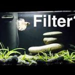 Do Betta Fish Need a Filter?