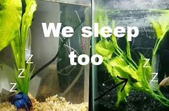 How Does Betta Fish Sleep? Why Aquarium Lighting is Important